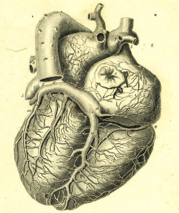Vintage Heart Illustration Medical