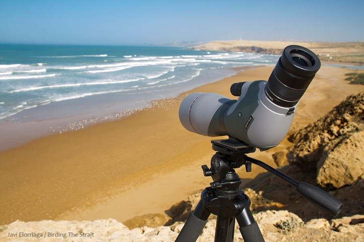 bird scope