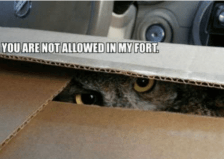 """An owl peers threateningly out of a box. Some text above the box says """"You are not allowed in my fort."""""""