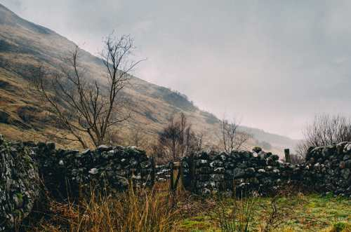 stone fence of sheep pasture