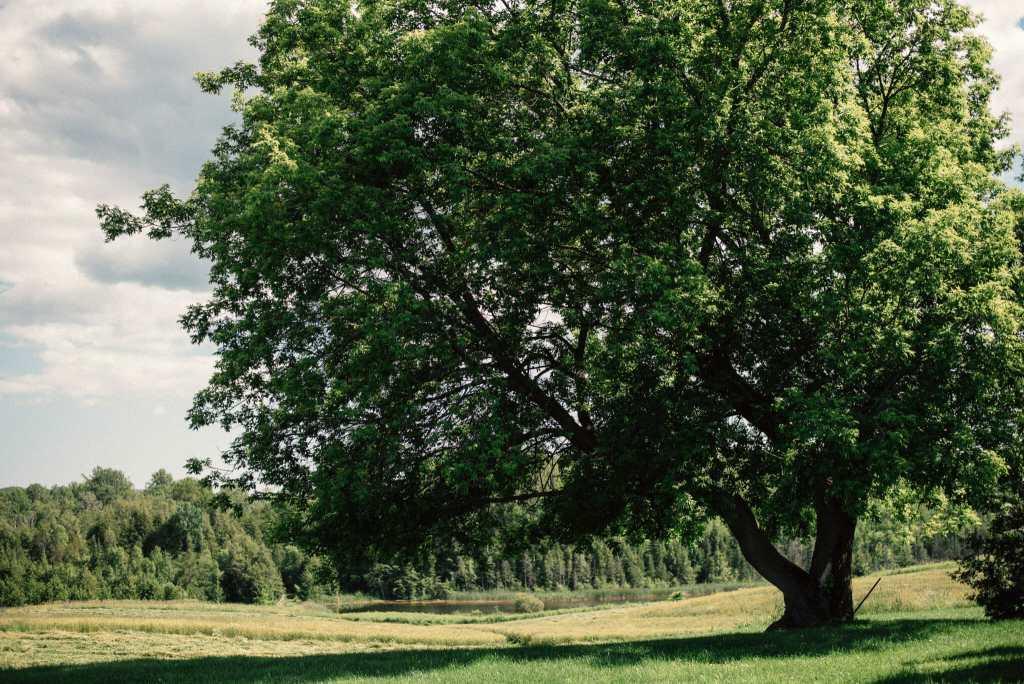 large tree on the property of kawartha wedding venues