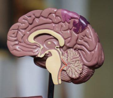Jak hackować Twój mózg, żeby lepiej się uczyć?