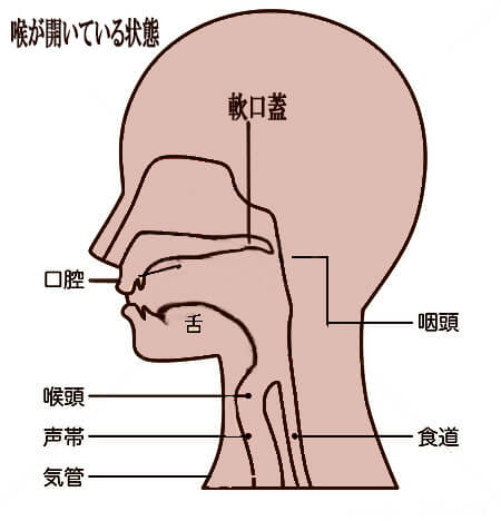 ビューティーボイストレーナー、ボイトレグッズ、ボイトレ器具、ボイトレ、発声練習、喉を開く、腹式呼吸、