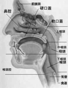 鼻腔、口腔、咽頭、共鳴、鼻腔共鳴、口腔共鳴
