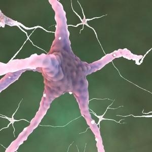 L'impact des Glutamates et des Aspartates sur le Cerveau et le système nerveux