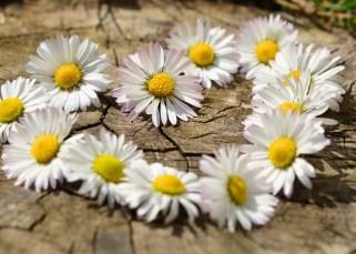 Découvre la fleur qui est dans ton coeur 3