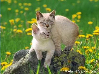 L'Amour c'est... 4
