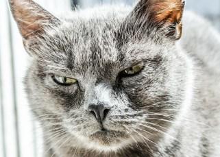 Bénis ta colère 9