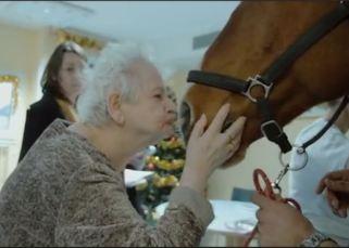 Peyo, cheval de coeur 6