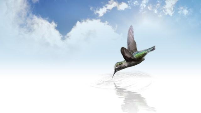 La parabole du colibri 1