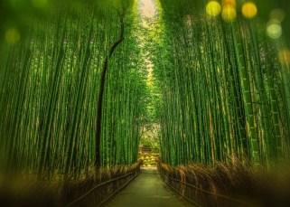 La fougère et le bambou 25