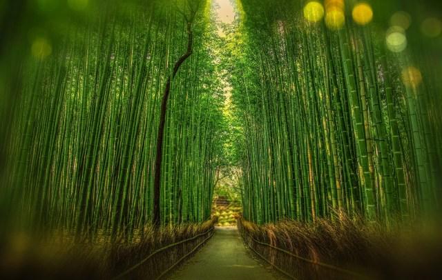 La fougère et le bambou 1
