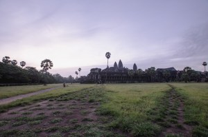 Angkor Wat rose, Cambodge