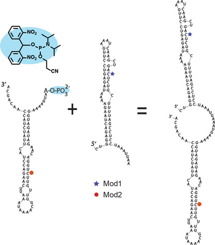 Chemical synthesis of long RNAs with terminal 5′‐phosphate