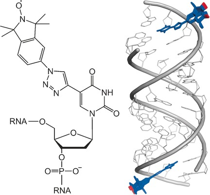 Post‐synthetic Spin‐Labeling of RNA through Click