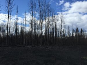 Debris after a wildfire