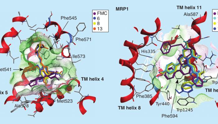 Optimizing the flavanone core toward new selective nitrogen-containing modulators of ABC transporters