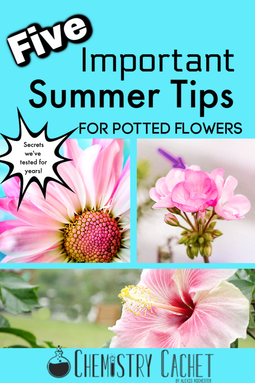 275 & Chemist Solutions: Important Summer Tips for Potted Flowers