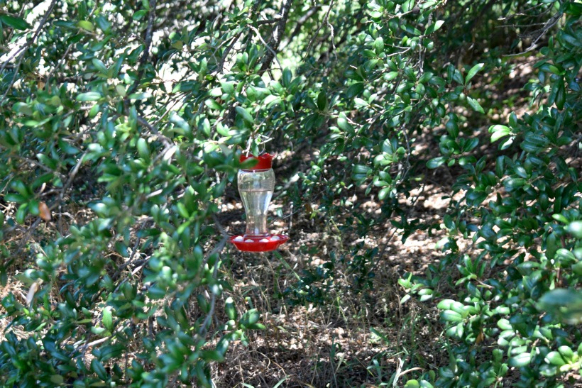 easy homemade hummingbird food recipe plus chemist tips for keeping mold away bees and - Homemade Hummingbird Food