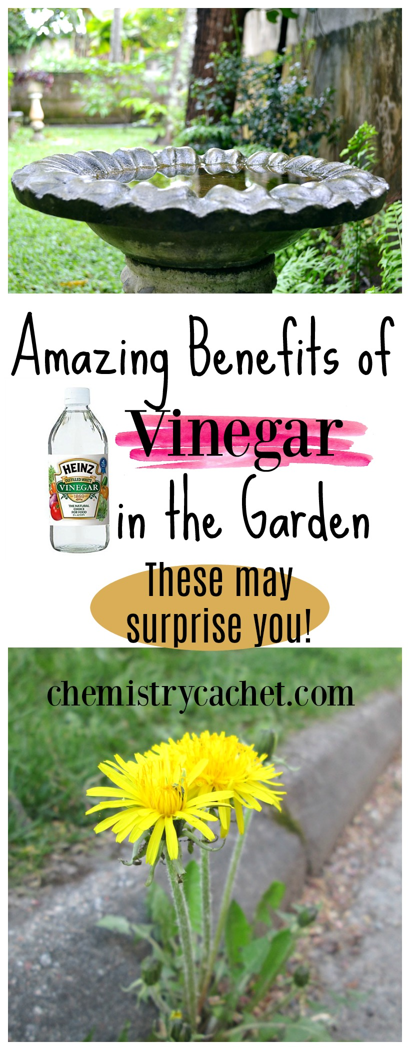 There are so many amazing benefits of vinegar in the garden. These may surprise you! Use vinegar this fall, spring, and summer to keep everything healthy and clean in the garden on chemistrycachet.com