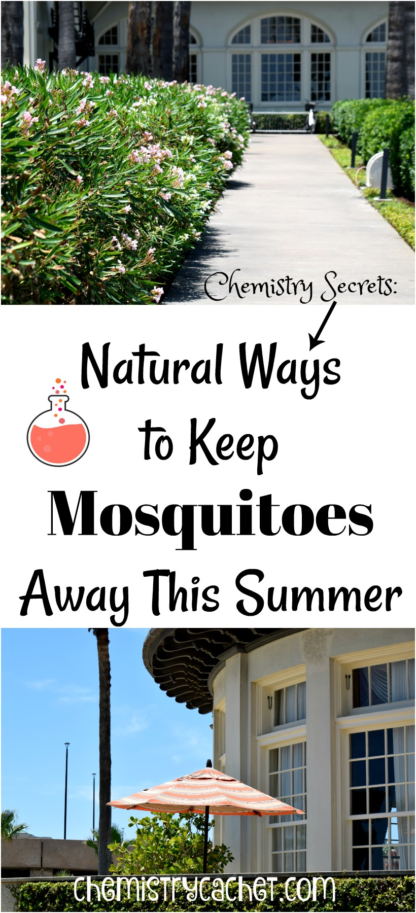 Chemistry Secrets Natural Ways To Keep Mosquitoes Away This Summer