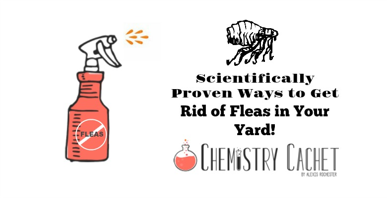 Scientifically Proven Ways to Get Rid of Fleas in Your Yard!