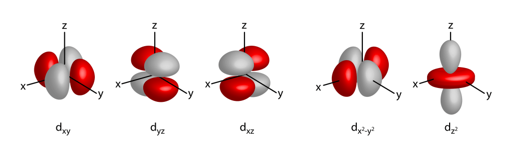 The shape of the d orbitals of atoms