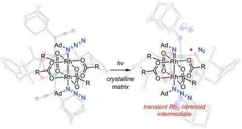 Characterization of a Reactive Rh2 Nitrenoid by Crystalline Matrix Isolation