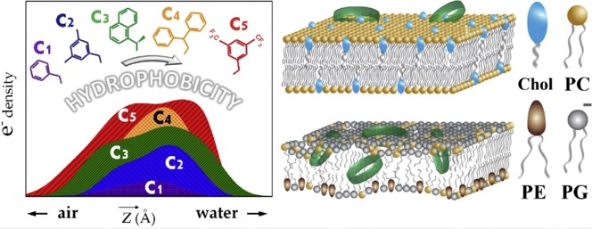 Hydrophobic interactions modulate antimicrobial peptoid selectivity towards anionic lipid membranes