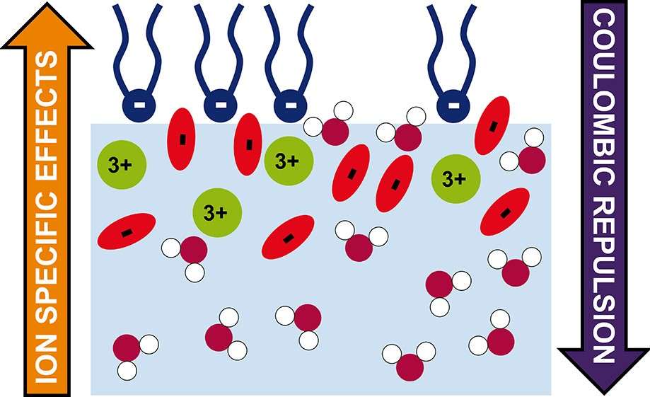 Anions Enhance Rare Earth Adsorption at Charged Surfaces