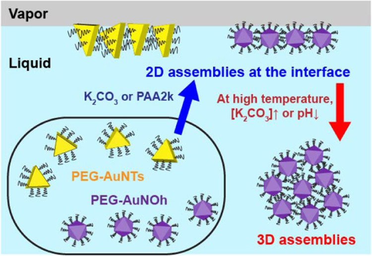 Two- and Three-Dimensional Assembly of Anisotropic Gold Nanoparticles