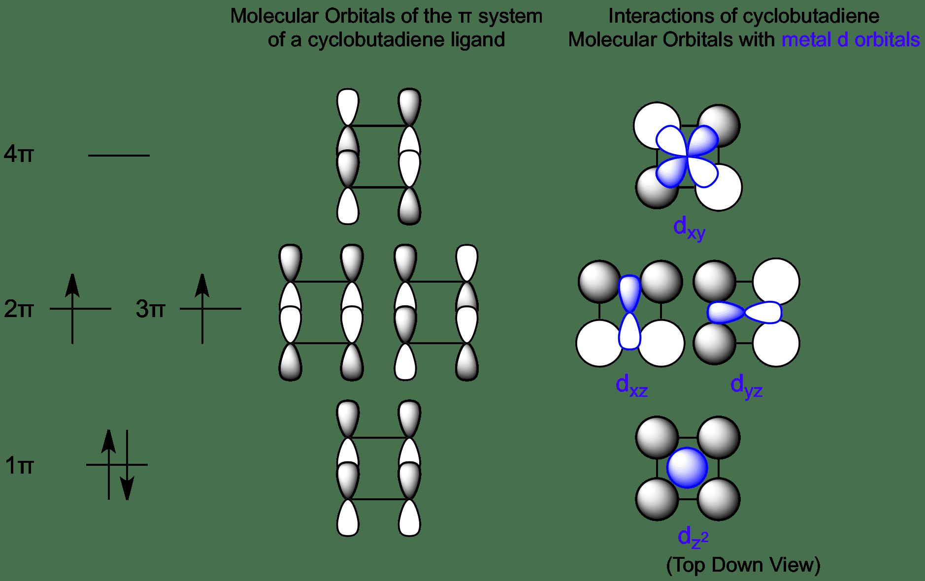 Interactions Between Cyclobuta Ne Molecular Orbitals And