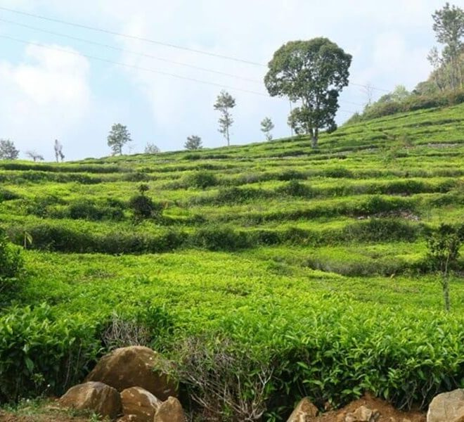 kotagiri plots for sale