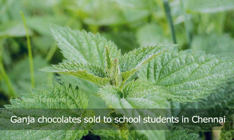 Ganja chocolates sold to school students in Chennai