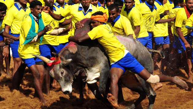 Centre to withdraw Jallikattu notification from SC