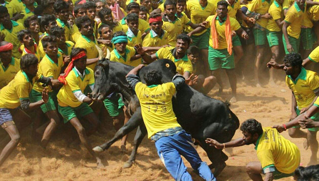 36 injured in Jallikattu in Avaniapuram