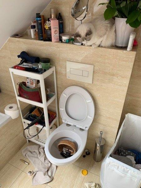 Почему кошка смотрит в стену
