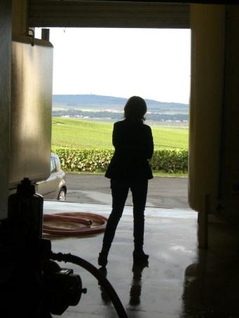 Cigalus vinification tank room