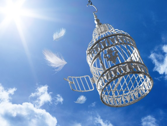 positive escape fly away