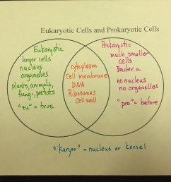 plant cells and animal cells venn diagram [ 3264 x 2448 Pixel ]