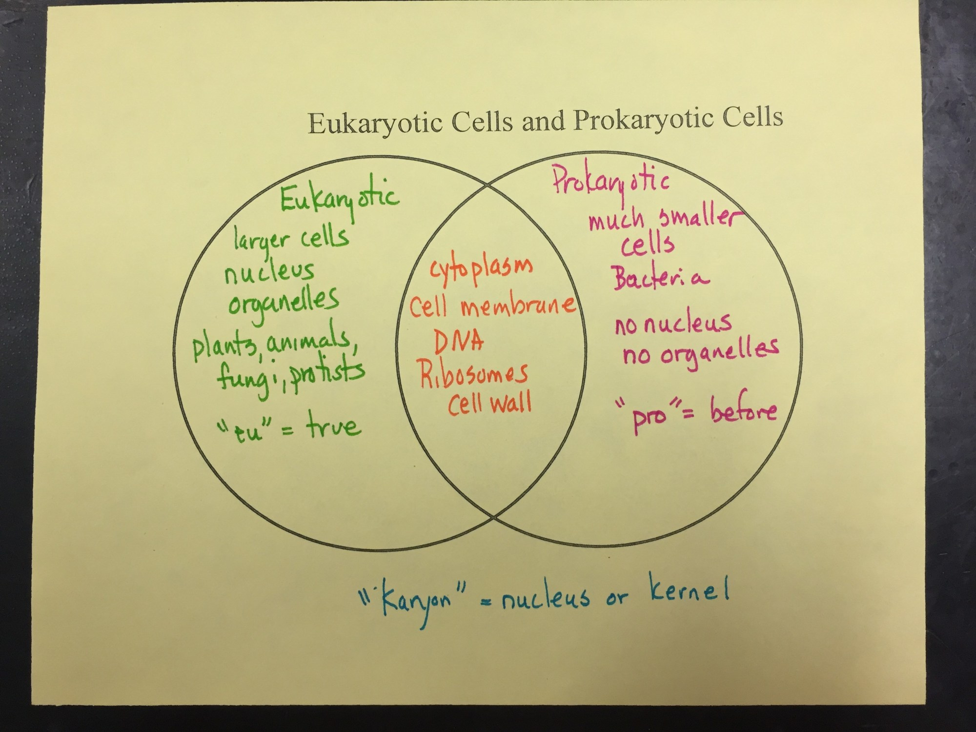 hight resolution of plant cells and animal cells venn diagram