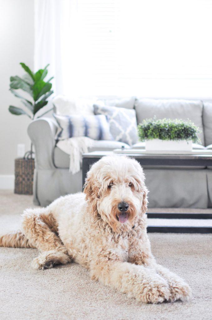 Pet resistant carpet padding for Pet resistant carpet