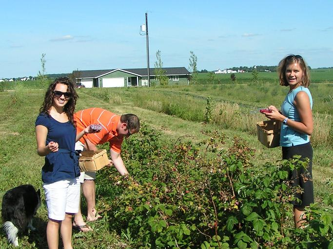 """Picking in the """"Taylor Raspberry"""" patch."""