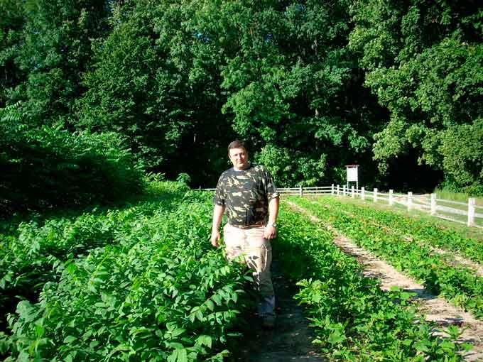 Горіх чорний – нетрадиційна порода для лісів Черкащини. Проте його вирощування вже більш як десять років практикують в Кам96;янському лісгоспі й досягли непоганих результатів.