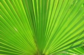 fan-palm-283152_1920