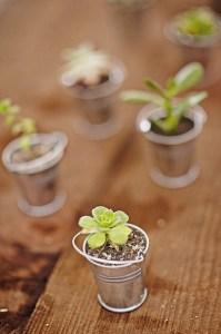 herb tin favor