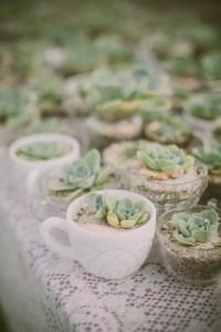 teacup succulent