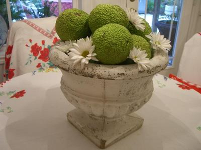 the estate of things chooses hedge apples display