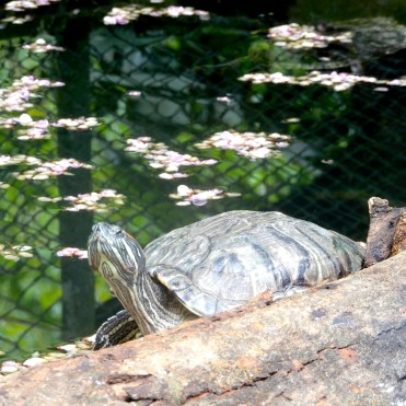 Mauritius La Vanille Nature Park Crocodile Park DSCN0278