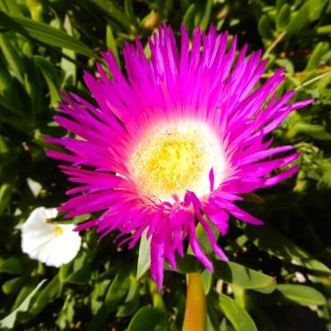 Morocco flowers DSCN8451